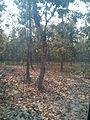 Bangabandhu Sheikh Mujib Safari Park (30).jpg