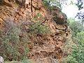 Banias-2008-734.jpg