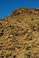 Barrel Cactus (11524166193).jpg