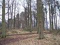 Barrow Piece Plantation - geograph.org.uk - 135092.jpg