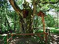 Bartus Oak.jpg