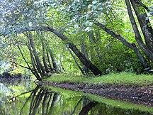 New Jersey-Geografia fisica-Batsto River