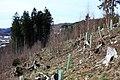 Baumpflanzaktion Bergwaldprojekt Werdohl 2015 4.jpg