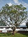 BayombongCathedraljf9981 02.JPG