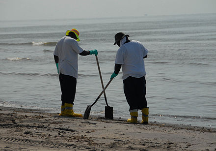 Workers cleaning a beach affected by the spill. Beach Clean up during DWH (8743617563).jpg