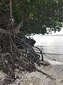 Beach view Mangel Halto 11 37 02 988000.jpeg