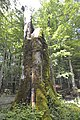Beauty of National Park Biogradska Gora, Montenegro 03.jpg