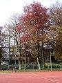 Beech trees, Upton Park - geograph.org.uk - 1837939.jpg