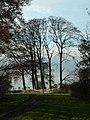 Beech trees at Pockthorpe - geograph.org.uk - 403656.jpg