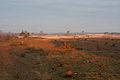 Beekhuizerzand,Stuifzand herstel, werk voor natuur, Saxifraga - Jan Nijendijk4486.jpg
