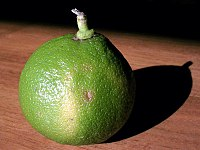 Bergamot orange - Wikipedia