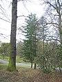 Bergpark Wilhelmshöhe - Baum 282a 2020-01-14 c.JPG