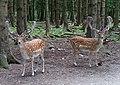 Bergtierpark Blindham-13.jpg