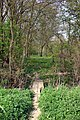 Berners Wood - geograph.org.uk - 400576.jpg