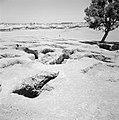 Bersjeba Archeologische resten aan de rand van een nieuwbouwwijk, Bestanddeelnr 255-3542.jpg