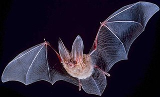 What Is It Like to Be a Bat? paper by Thomas Nagel