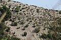 Bimsabhang nahe dem Monte Chirica, Lipari, mit edaphischer Wüste.jpg