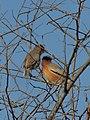 Birds at Keoladeo.jpg