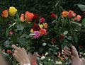 Blomster01 250711.jpg
