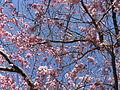Blossoms in Dronten 8.JPG