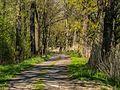 Bory Niemodlińskie - szlak rowerowy przy stawie Sangów.jpg