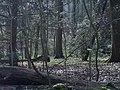 Bos - panoramio (8).jpg