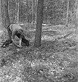 Bosbewerking, arbeiders, boomstammen, werkzaamheden, zagen, Bestanddeelnr 251-8480.jpg