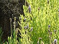 Botânico 10 - CGLS.jpg