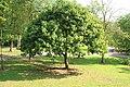 Botanic Gardens - panoramio (8).jpg