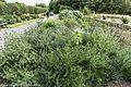 Botanic Gardens In Glasnevin (Dublin) (7951840124).jpg