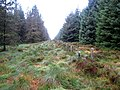 Boundary fence near Ellis Crag - geograph.org.uk - 582329.jpg