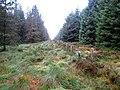 Boundary fence near Ellis Crag - geograph.org.uk - 582329.jpg