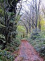 Boundary track on edge of woods - Nov 2012 - panoramio.jpg