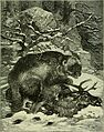 Brehm's Life of animals - a complete natural history for popular home instruction and for the use of schools. Mammalia (1896) (20226587969).jpg
