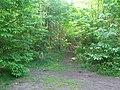 Bridleway in Oldbury Woods - geograph.org.uk - 1321155.jpg