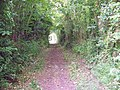 Bridleway near Ashmore - geograph.org.uk - 1347398.jpg