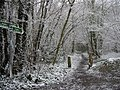 Bridleways in the snow, Covert Wood - geograph.org.uk - 735411.jpg