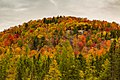 Bright Fall Colors - Hills of Onchiota - Autumn in Vermontville, Upstate New York (30273939986).jpg