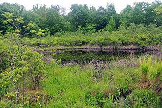 Brown's Lake Bog - Brown's Lake Bog
