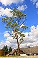 Bryn Bettws - panoramio.jpg