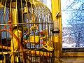 Bucuresti, Romania, Papagali in iarna (3).JPG