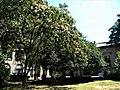 Bucuresti, Romania. LIBRARIA CARTURESTI - VERONA. Iulie 2016. (B-II-m-B-19834).jpg