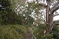 Bundeena - panoramio (25).jpg