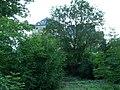 Burg Rheinfels - panoramio (1).jpg