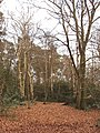 Burnham Beeches - birch, beech and holly - geograph.org.uk - 122546.jpg