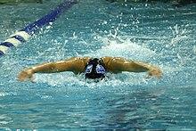 delfino nuoto