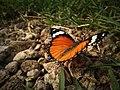 Butterfly king.jpg