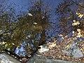C'est l'automne - Falling leaves - panoramio.jpg
