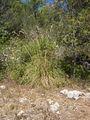 CB Menorca Gras 3.jpg