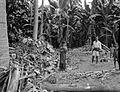 COLLECTIE TROPENMUSEUM Tijdens een overstroming (bandjir) in Mandar heeft het stromende water dat dwars door een klapper- en pisangtuin is gegaan palmbladeren takken en stammen losgerukt en meegevoerd Celebes TMnr 10004444.jpg